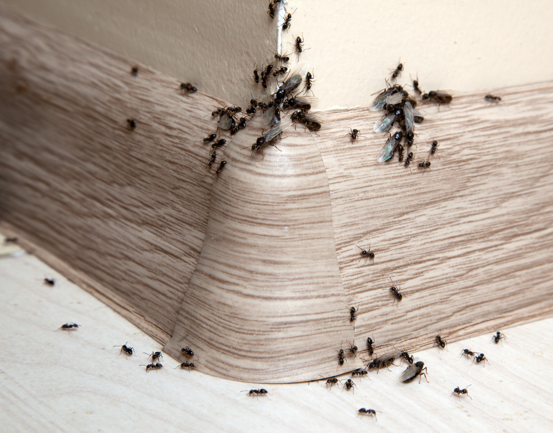 Ant Infestation, Pest Control in Nine Elms, SW8. Call Now 020 8166 9746