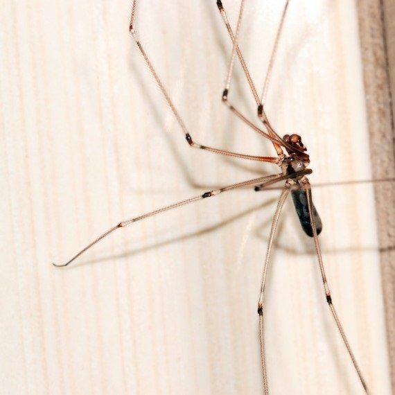 Spiders, Pest Control in Nine Elms, SW8. Call Now! 020 8166 9746