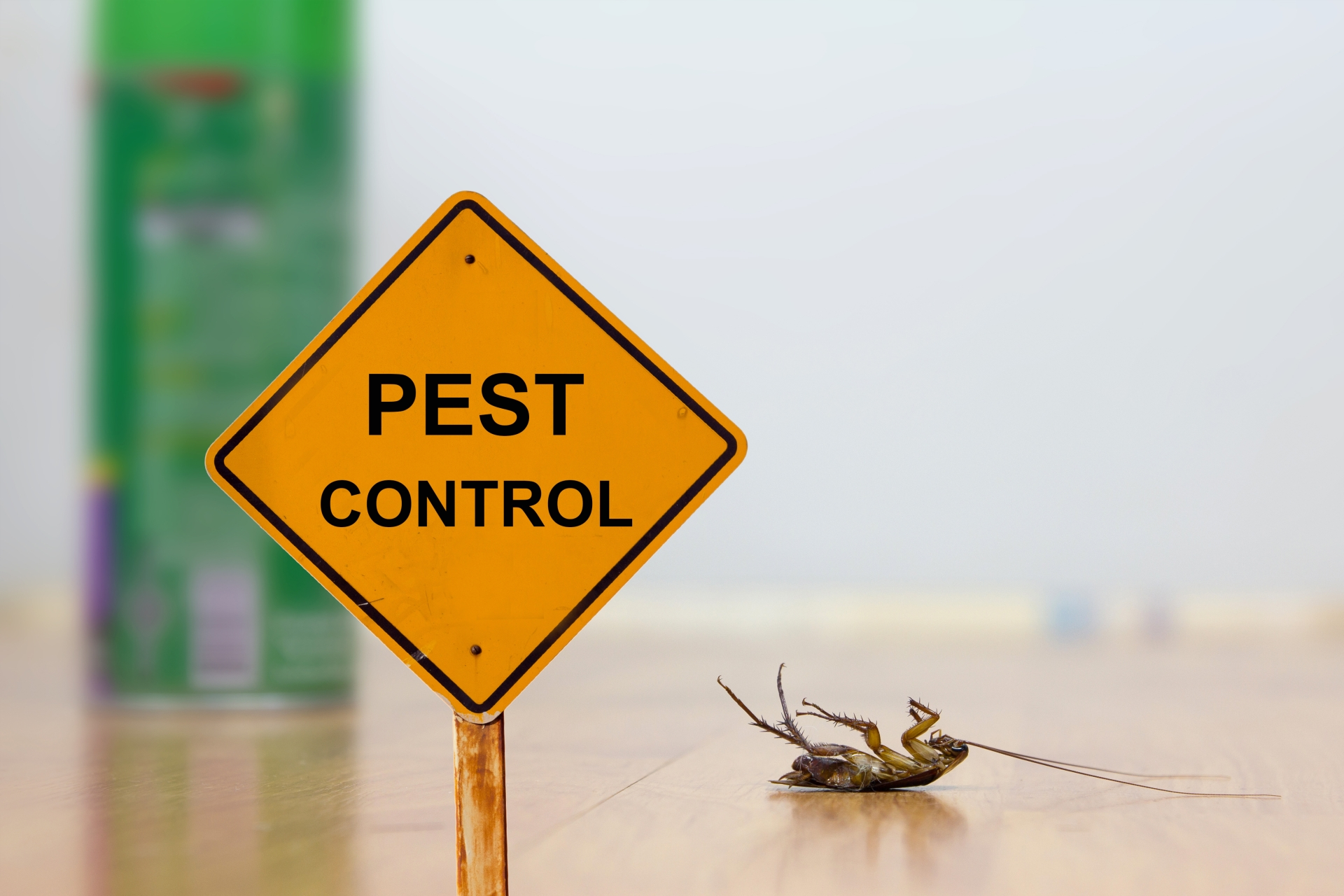 24 Hour Pest Control, Pest Control in Nine Elms, SW8. Call Now 020 8166 9746
